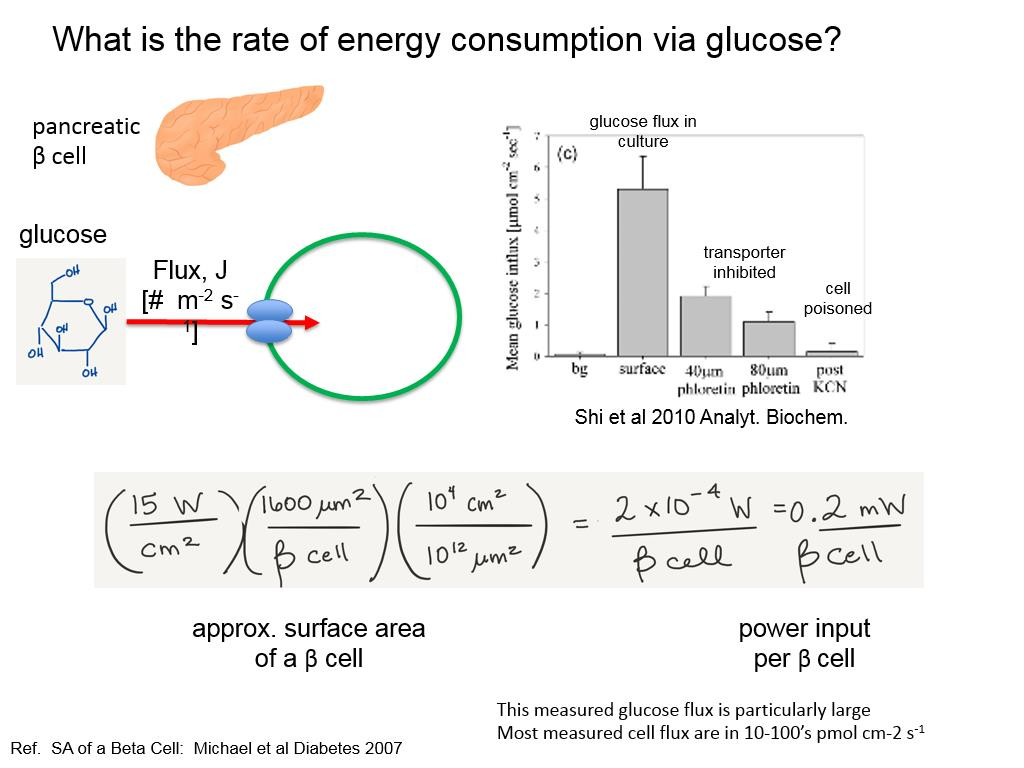 What is the rate of energy consumption via glucose?
