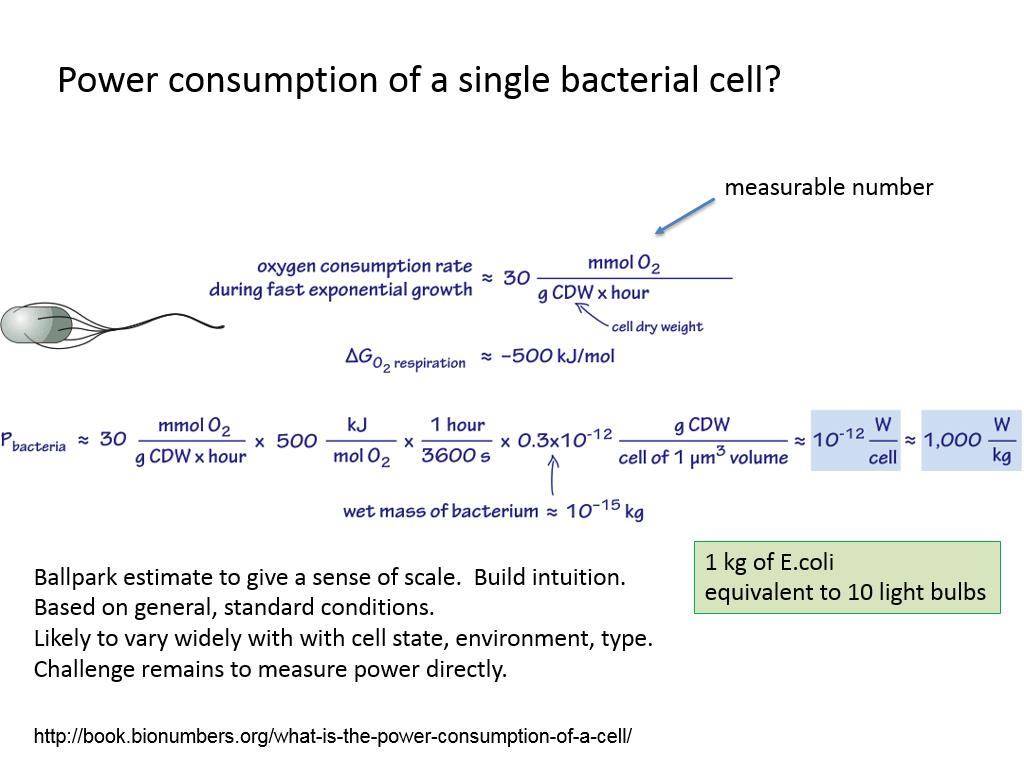 Power consumption of a single bacterial cell?