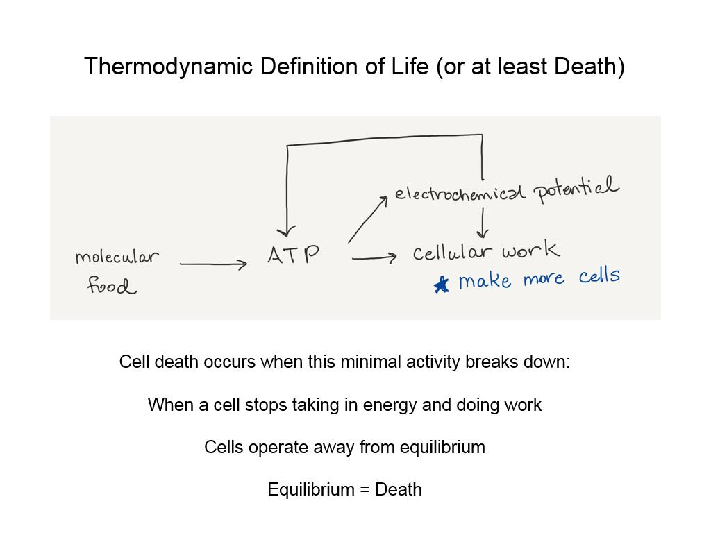 Thermodynamic Definition of Life (or at least Death)