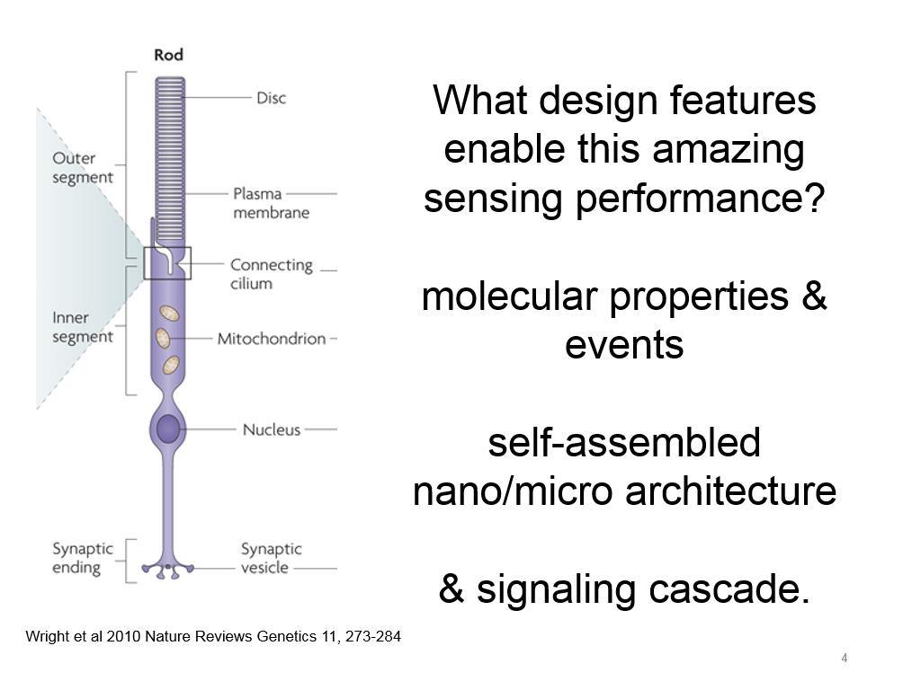 What design features enable this amazing sensing performance?.