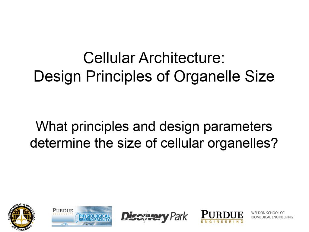 L2.1: Cellular Architecture: Design Principles of Organelle Size