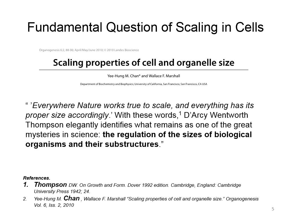 Fundamental Question of Scaling in Cells