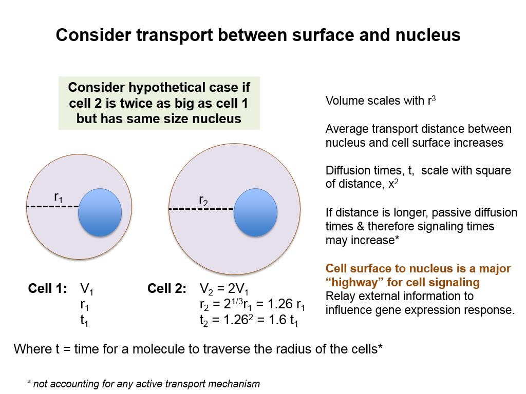 Consider transport between surface and nucleus