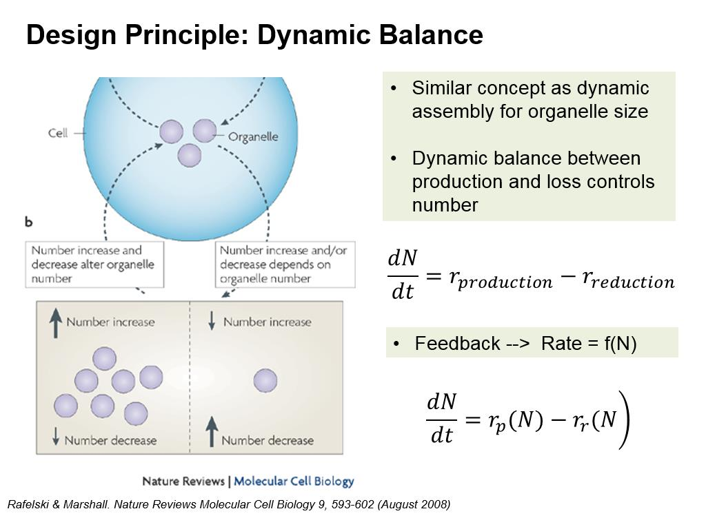 Design Principle: Dynamic Balance