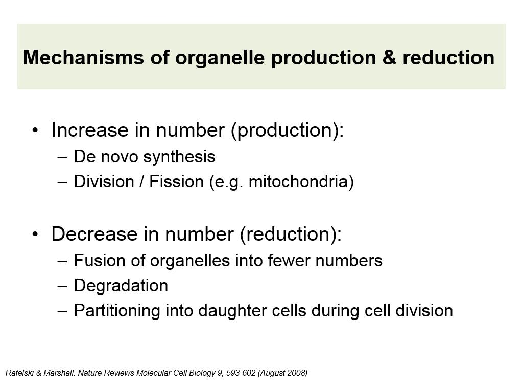 Mechanisms of organelle production & reduction