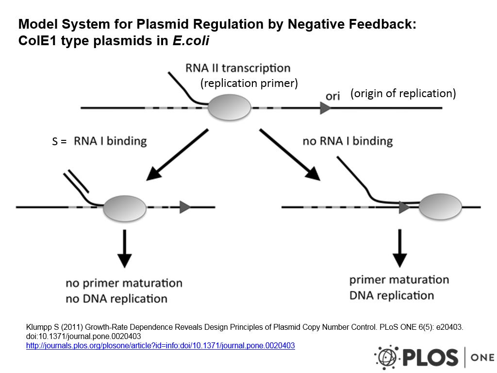 Model System for Plasmid Regulation by Negative Feedback