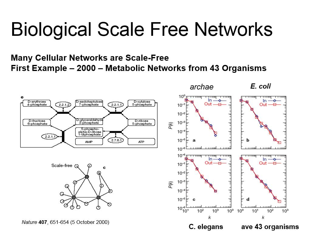 Biological Scale Free Networks