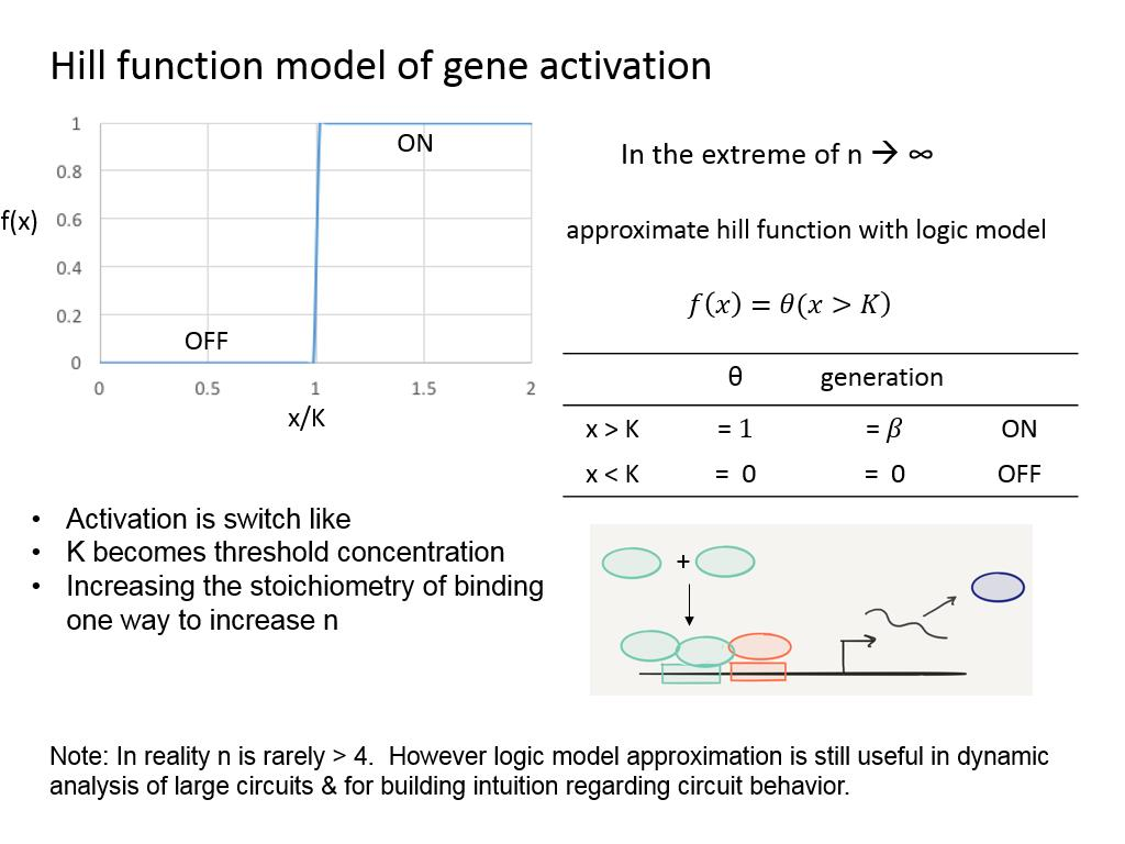 Hill function model of gene activation
