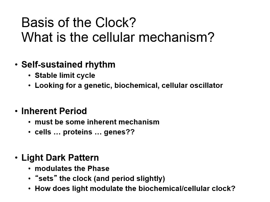 Basis of the Clock? What is the cellular mechanism?