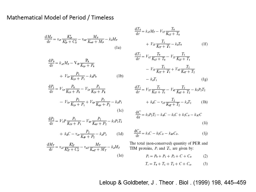 Mathematical Model of Period / Timeless