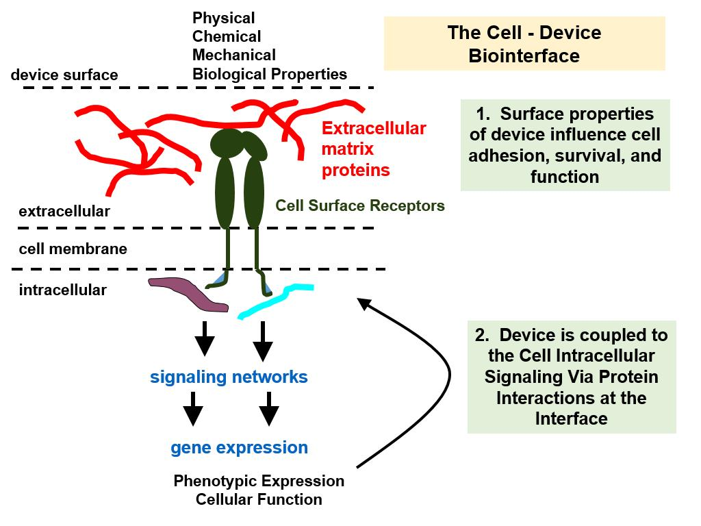 The Cell - Device Biointerface