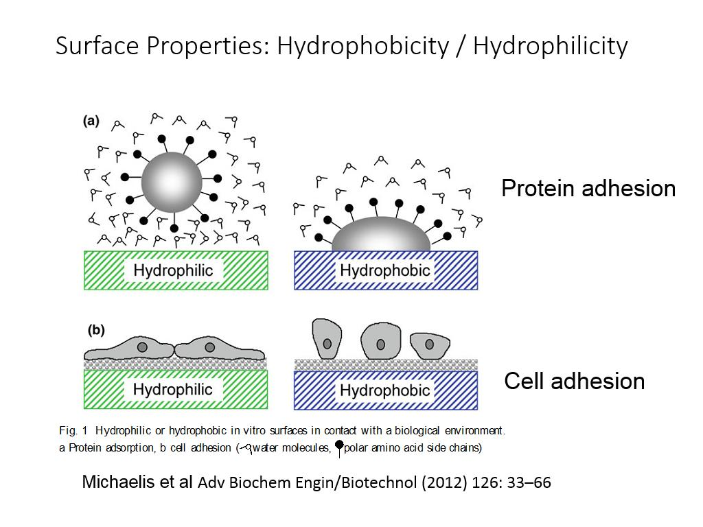 Surface Properties: Hydrophobicity / Hydrophilicity
