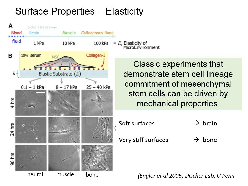 Surface Properties – Elasticity