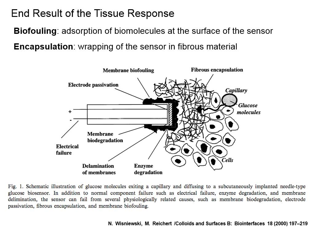 End Result of the Tissue Response