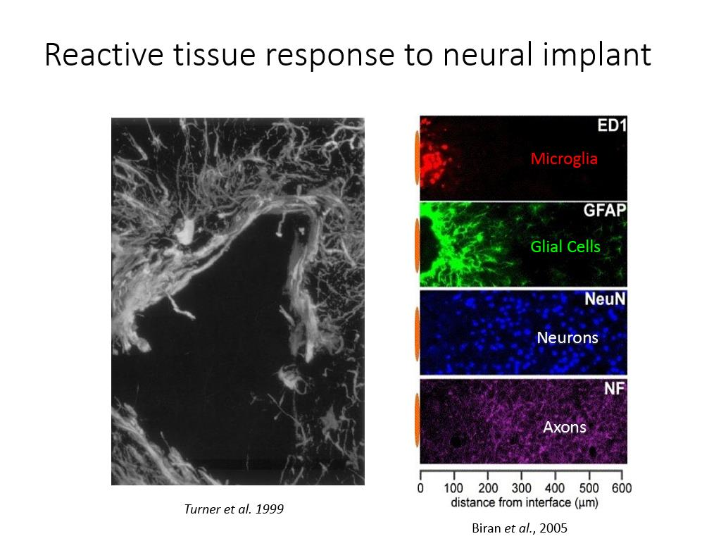 Reactive tissue response to neural implant