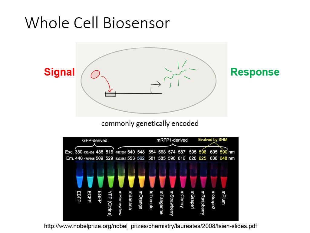 Whole Cell Biosensor