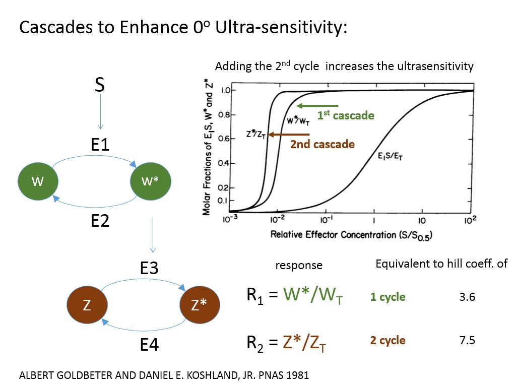 Cascades to Enhance 0o Ultra-sensitivity: