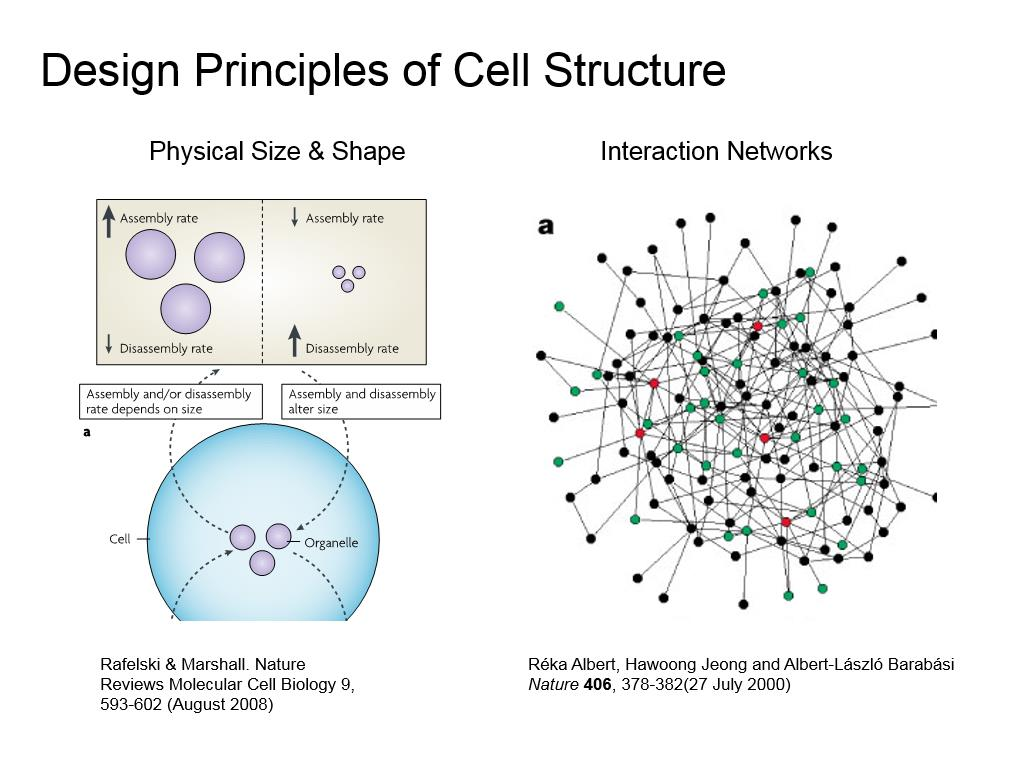 Design Principles of Cell Structure