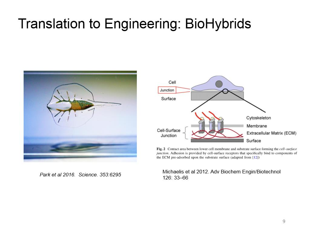 Translation to Engineering: BioHybrids