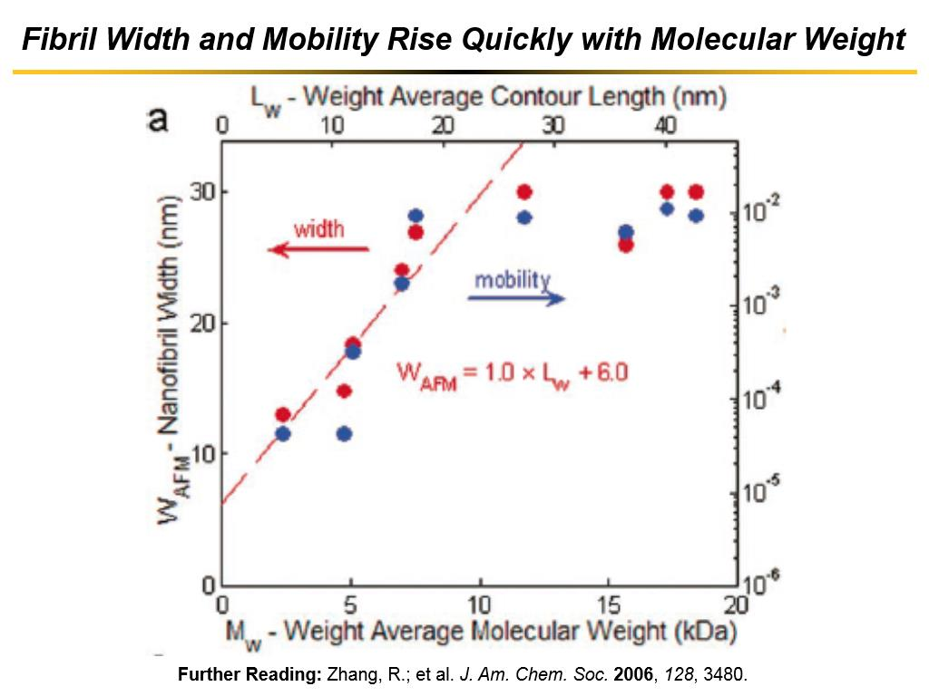 Fibril Width and Mobility Rise Quickly with Molecular Weight