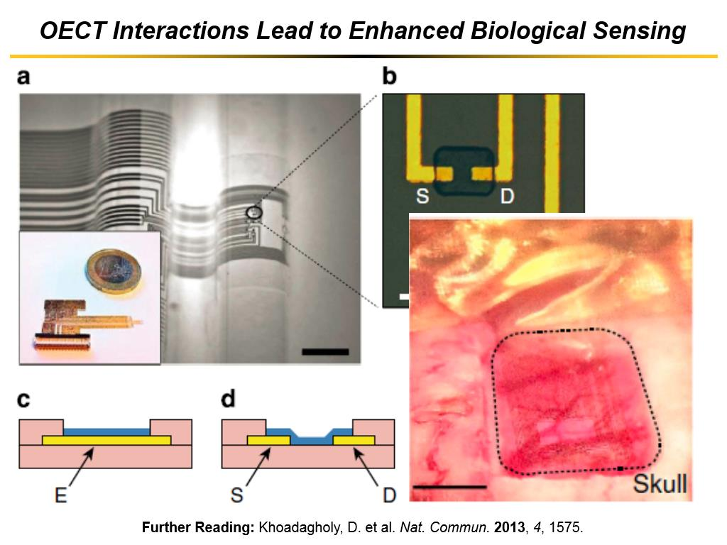 OECT Interactions Lead to Enhanced Biological Sensing