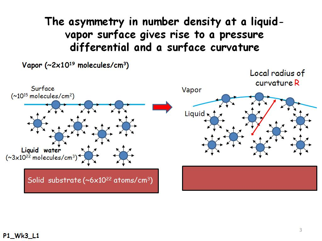 Asymmetry in number density at a liquid-vapor surface