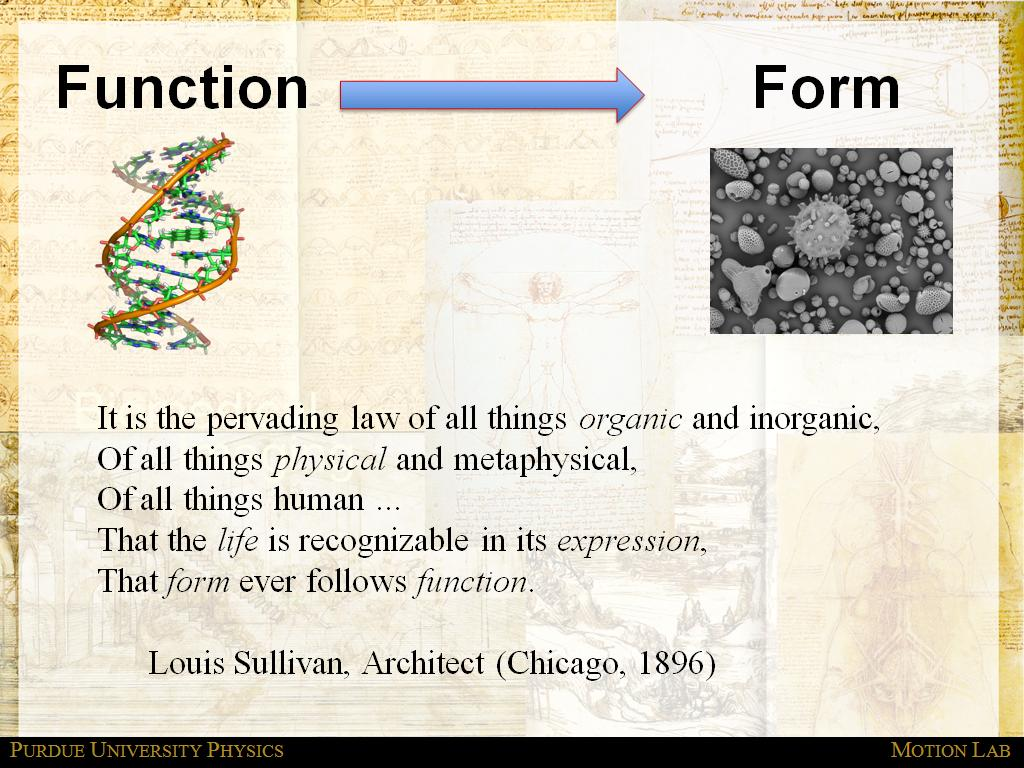 Function - Form - Motion