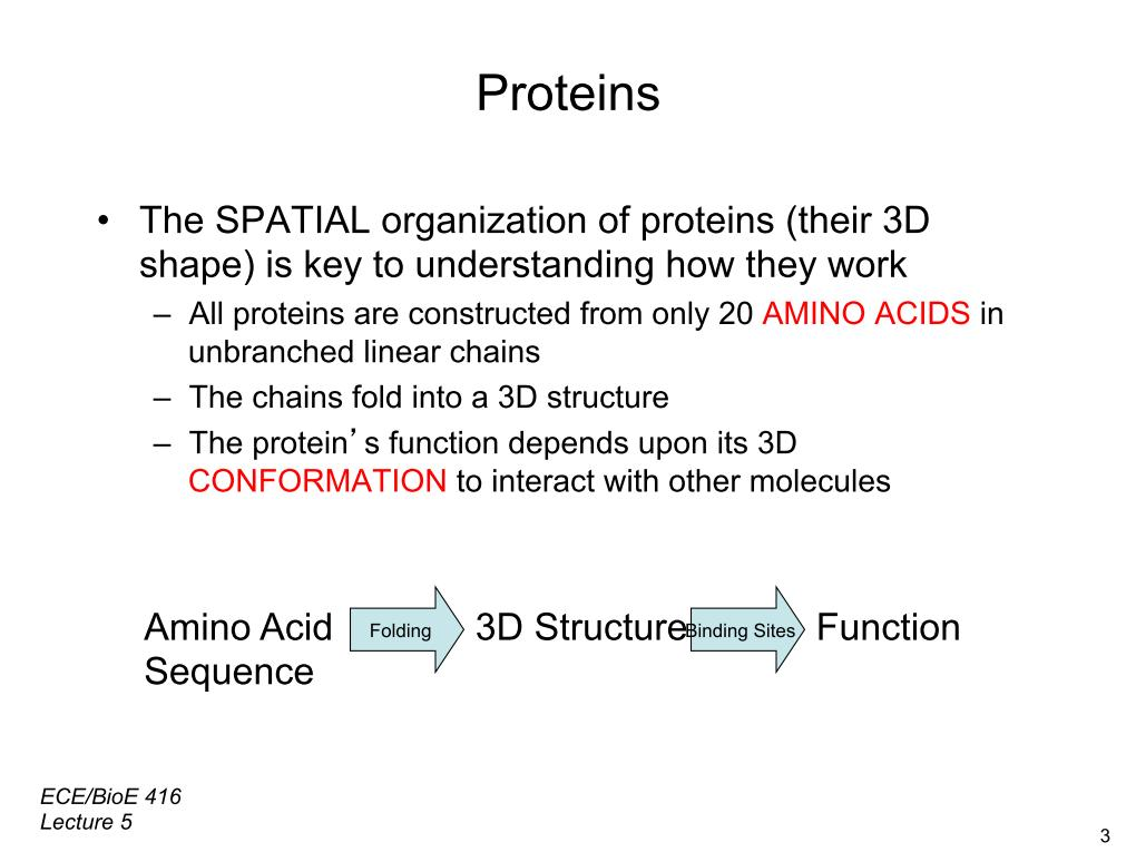 Lesson 5: Proteins
