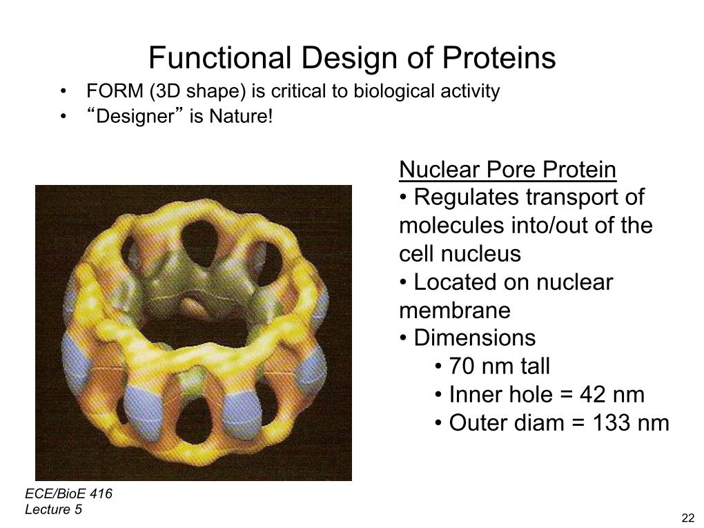Functional Design of Proteins