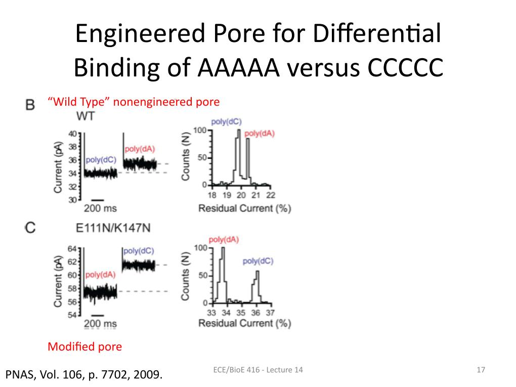 Engineered Pore for Differential Binding of AAAAA versus CCCCC