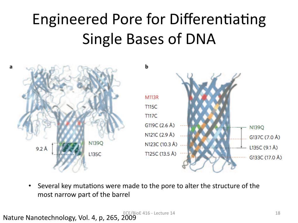 Engineered Pore for Differential Binding of Single Bases of DNA