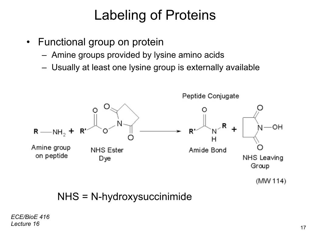 Labeling of Proteins