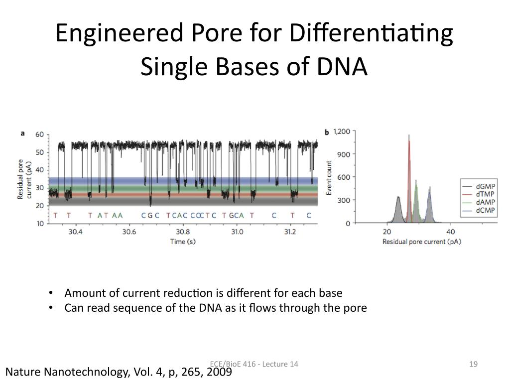 Engineered Pore for Differentiating Single Bases of DNA