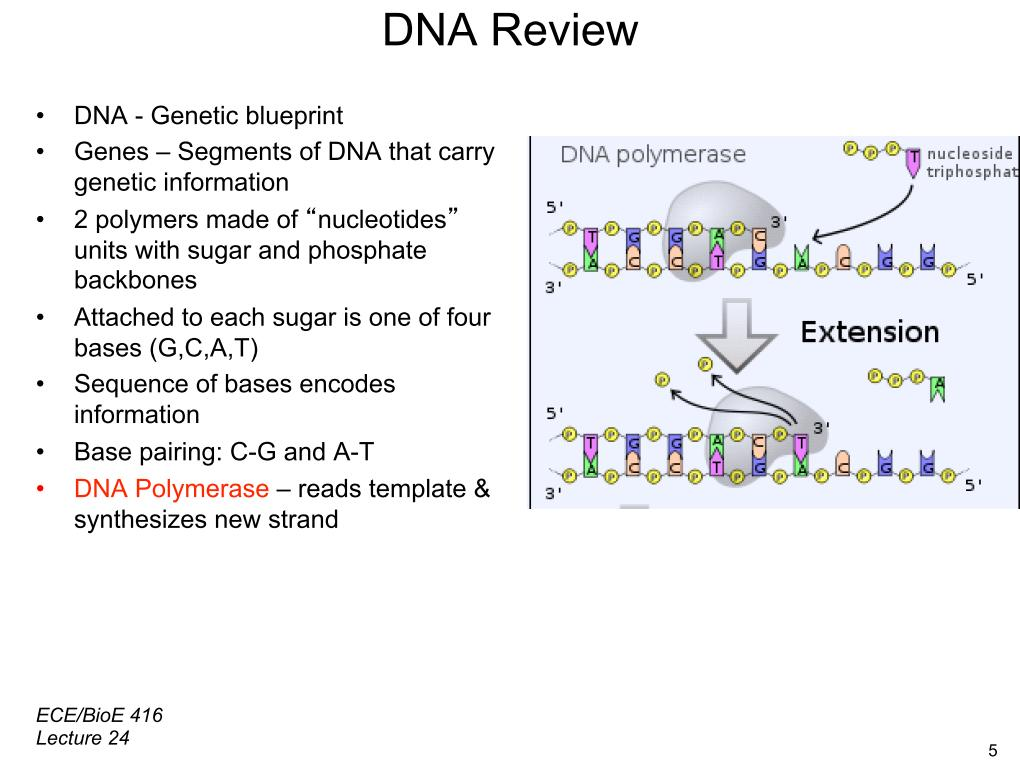 Nanohub resources illinois ece 416 protein microarrays ii dna review dna genetic blueprint genes malvernweather Images