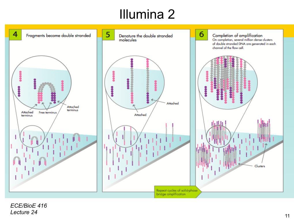nanoHUB.org - Resources: [Illinois] ECE 416 Protein Microarrays II ...