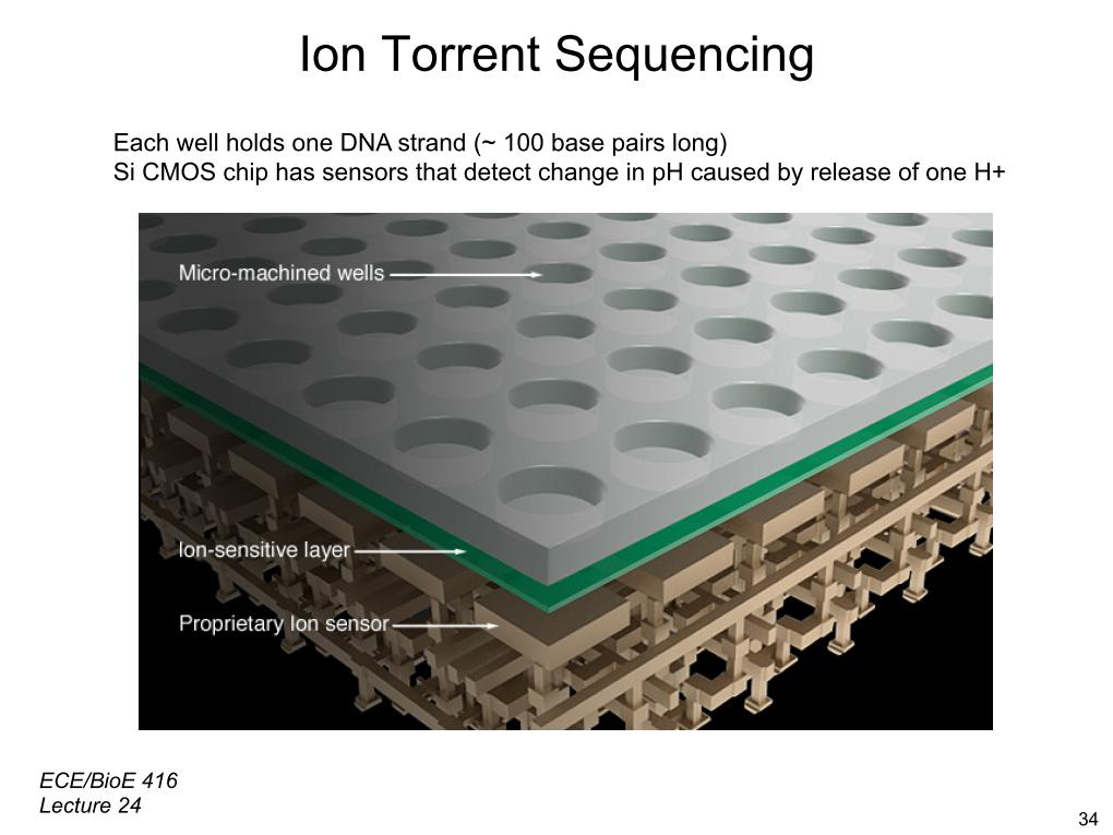 Ion Torrent Sequencing