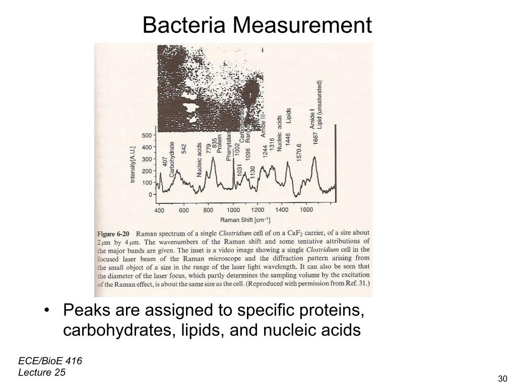 Bacteria Measurement