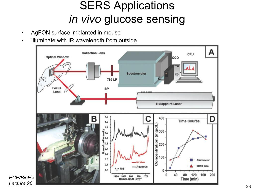 SERS Application in vivo glucose sensing