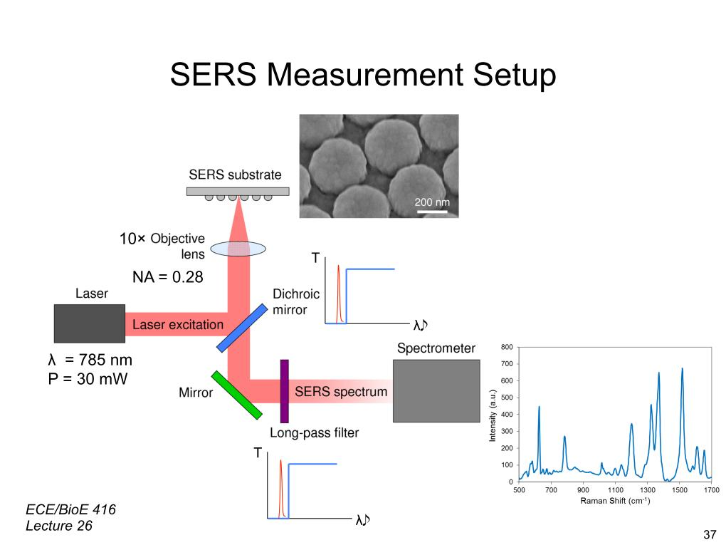 SERS Measurement Setup
