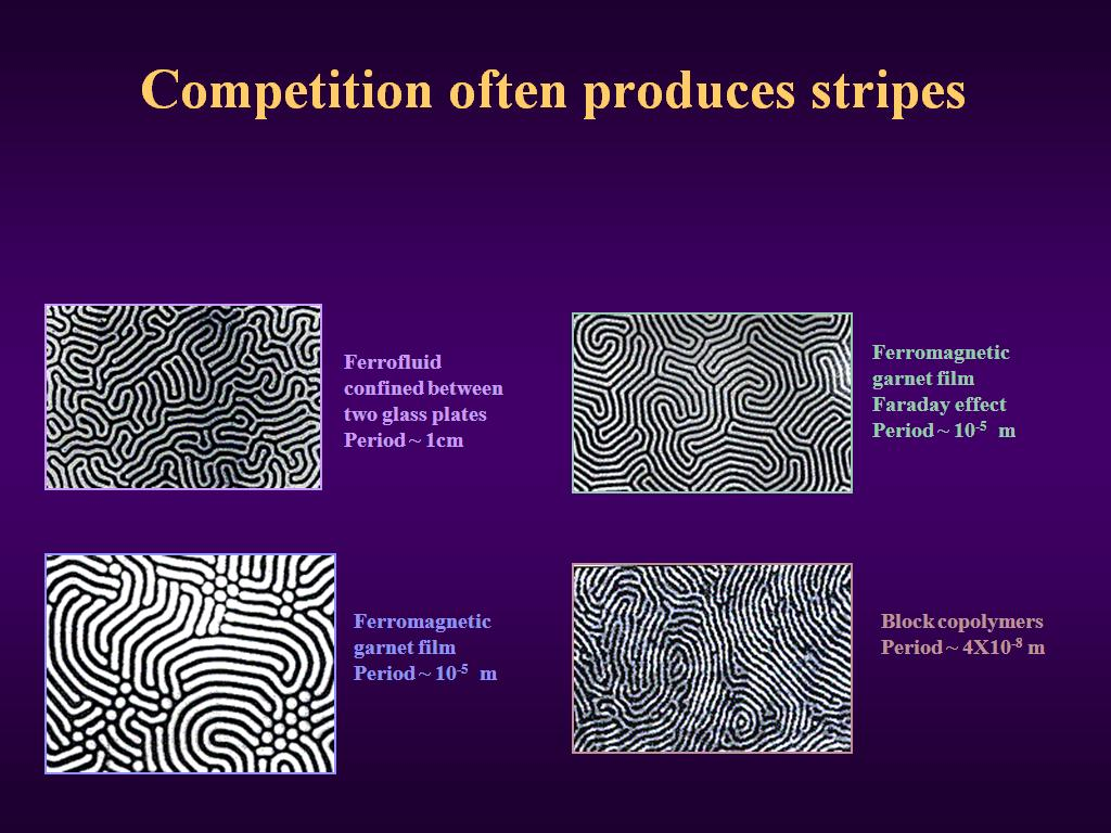 Competition often produces stripes