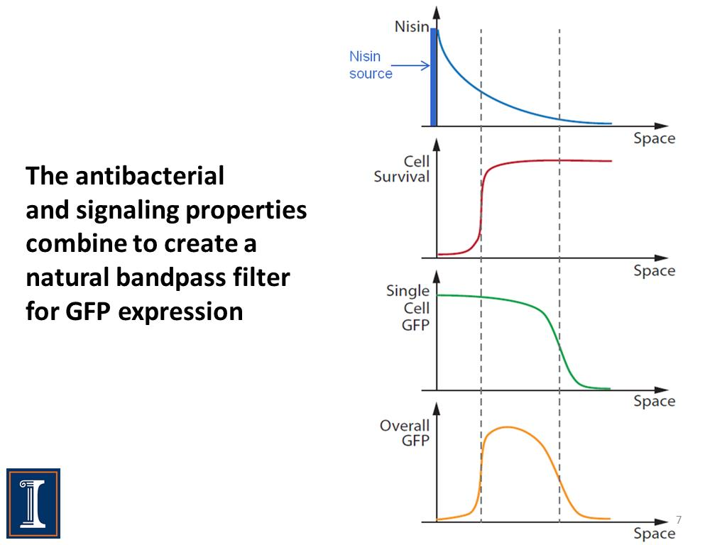 The antibacterial and signaling properties combine to create a natural bandpass filter for GFP expression