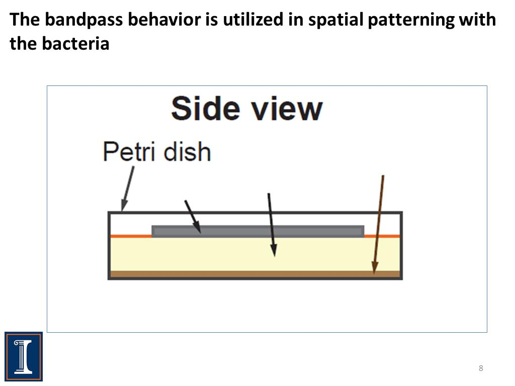 The bandpass behavior is utilized in spatial patterning with the bacteria