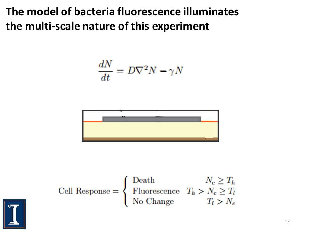 The model of bacteria fluorescence illuminates the multi-scale nature of this experiment