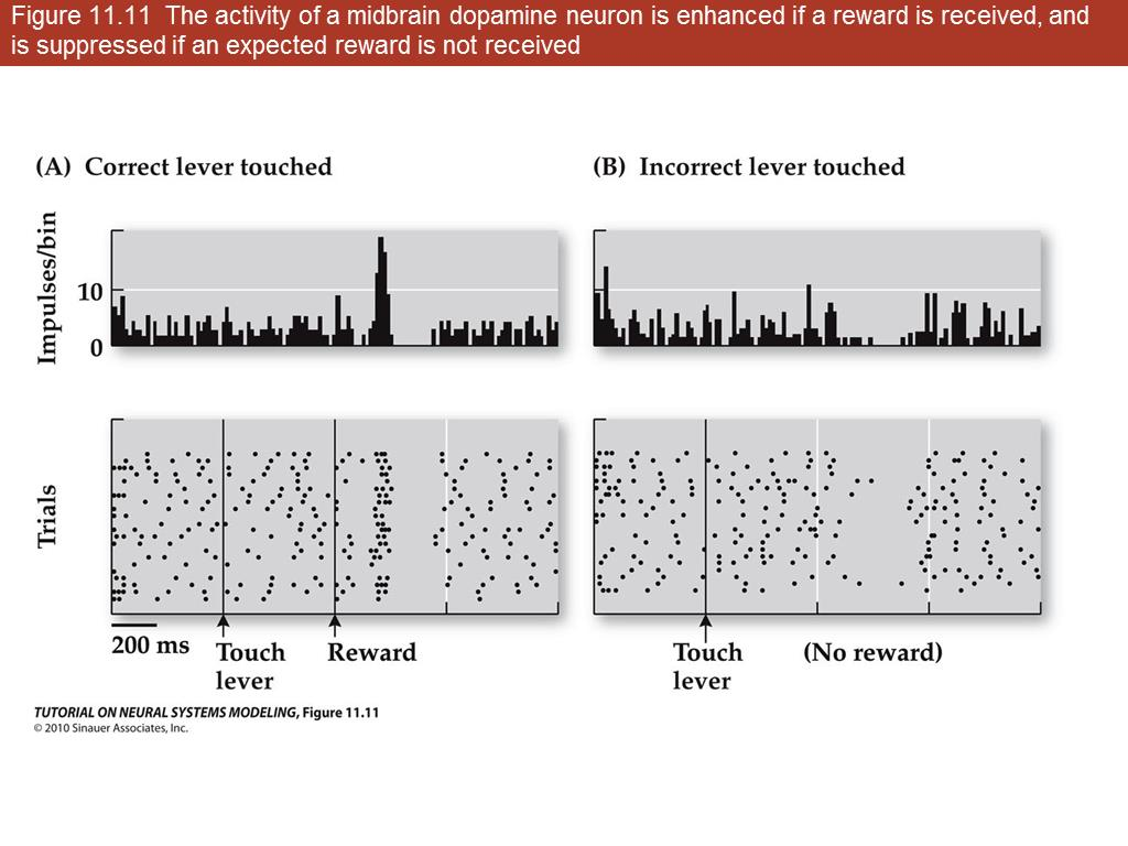 Figure 11.14 Reverse replay of rat hippocampal place cell activity