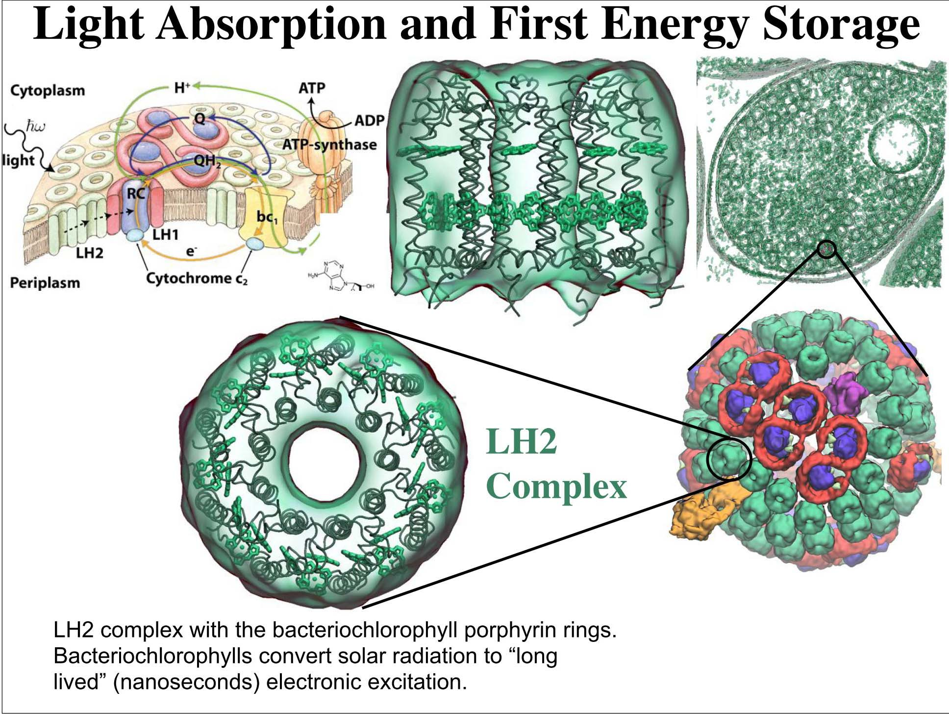 Light Absorption and First Energy Storage