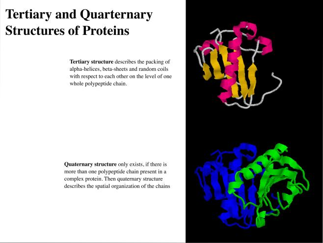 Tertiary and Quaternary Structures of Proteins