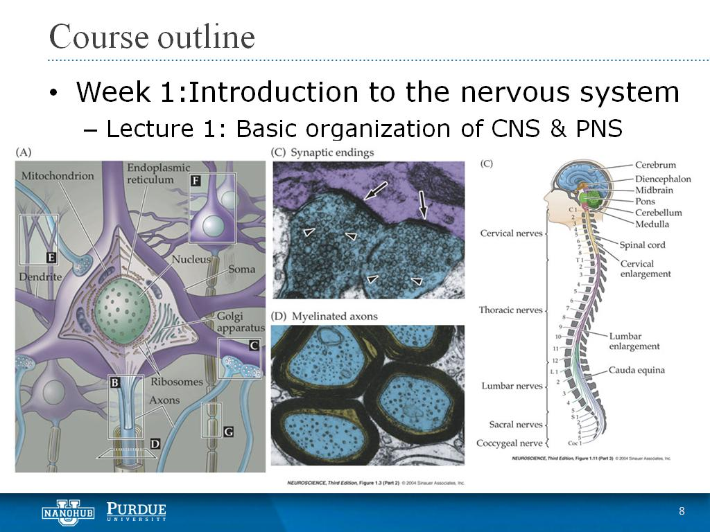 Week 1 Lecture 1: Basic organization of CNS & PNS