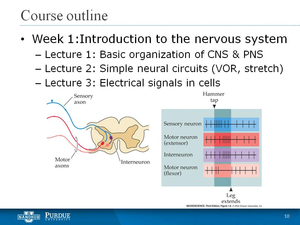 Week 1 Lecture 3: Electrical signals in cells