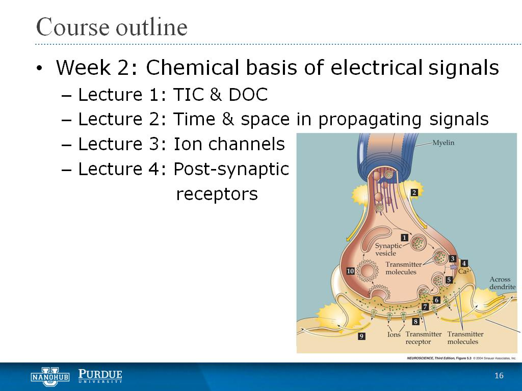 Week 2 Lecture 4: Post-synaptic receptors