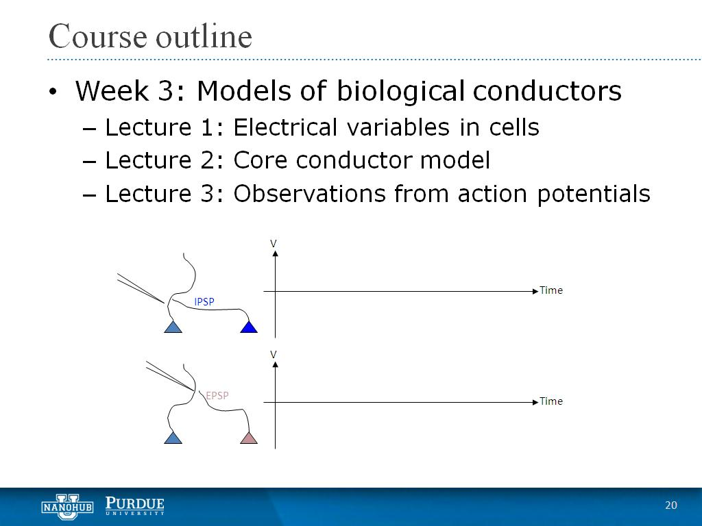 Week 3 Lecture 3: Observations from action potentials